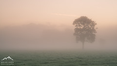 Pastel Dreams (.Brian Kerr Photography.) Tags: cumbria penrith edenvalley misty mistymorning sonyuk a7rii pastel skies colours trees sunrise briankerrphotography briankerrphoto