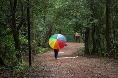 Matheran-4922 (Satish Chelluri) Tags: satishchelluri satishchelluriphotography matheran maharastra umbrella mansoon