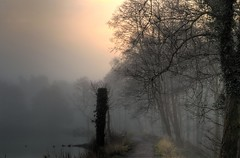 Mist (Eric Goncalves) Tags: morning trees winter mist cold nature landscape dean peaceful gloucestershire forestofdean nikond7000 rememberthatmomentlevel1