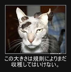 この大きさは規則によりまだ収穫してはいけない。 #猫 #ねずみ #忍耐力 (Demochi.Net) Tags: life cute sexy japan fun japanese motivator culture 日本 ペット 猫 demotivator 金 家族 結婚 ゲイ 女 子供 おっぱい 愛犬 政治 社会 巨乳 文化 眼鏡 教育 demotivators 経済 女性 初恋 r18 女子 カップル 子猫 女装 お笑い motivators 会社 少子化 企業 ユーモア 恋 悪い 格差 風刺 一言 デモチ 大喜利