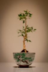 Arise! Little Bonsai... (Christian Kaden) Tags: plant tree miniature fotografie tea pflanze pflanzen perspective bowl pointofview bonsai  tee  baum  teaset perspektive chawan schale  miniatur teaservice blickwinkel       teegeschirr  trinkschale  matchabowl teautensils  teeutensilien matchaschale