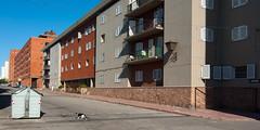 cat crossing (fedber) Tags: street cat fachada ciudadvieja prcv 20110121