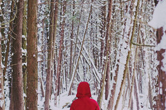 winter wonderland (Stephanie Loy Son) Tags: trees winter red snow cold snowflakes coat guelph snowcapped jacket hood 50mmf14 backofmyhead damnyouremote nikond7000 stephaniels