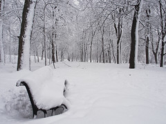 Bench covered with snow (BenDem) Tags: park city trees winter light cloud white snow cold tree ice nature weather forest bench way season landscape outdoors wooden cambodge frost branch quiet outdoor path montreal seat scenic freezing peaceful scene calm trail wintertime relaxation snowfall flickrfriday lostinthewoods