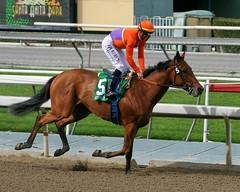 Beholder and Garrett Gomez (kimpossible pics) Tags: horse racetrack jockey horseracing racehorse thoroughbred arcadia equine beholder santaanita santaanitaracetrack garrettgomez lasvirgenesstakes richardmandella spendthriftfarm