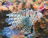 Lion Fish (Mark...L) Tags: fish zoo lion lionfish milwaukeecountyzoo zoosofnorthamerica allofnatureswildlifelevel1