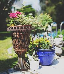 Brenizer (RaphaelD97) Tags: pink flowers blue canon garden eos magenta 5014 600d brenizermethod