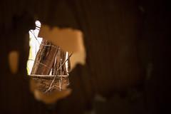 Abandoned Cottage (Axleuk) Tags: rotting leaves hammer death rat florida decay abandonedhouse dust lakeland golfball cobwebs urbex abandonedcottage plugsocket canon100400mm canoncanon5dmk3