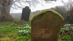 Nether Broughton Churchyard (Brian Negus) Tags: england mist church graveyard fog spring leicestershire unitedkingdom tombstone gravestone churchyard snowdrop stmarythevirgin blindphotographers netherbroughton