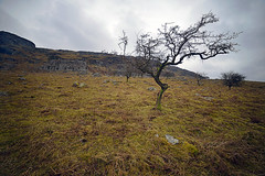 AGAINST THE WIND (DESPITE STRAIGHT LINES) Tags: morning trees tree nature beauty field fog wales nikon flickr day branch bare branches foggy scenic calm serenity bleak gps fullframe snowdonia stripped tranquil mothernature exposed manfrotto d800 northwales capelcurig againstthewind nantgwryd paulwilliams samyang llynmymbyr northwestwales snowdoniawales llynaumymbyr penygwrydhotel dyffrynmymbyr nikond800 nikongp1 samyang14mm capelcuriglakes despitestraightlines samyang14mmandnikond800 nanygwrydwales nikond800andsamyang14mm ilobsterit