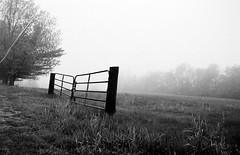 (-KatherineAlyce-) Tags: bw mist slr film grass fog analog 35mm canon fence rebel gate eerie