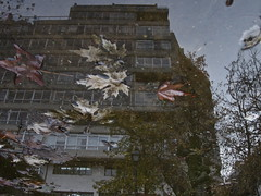 Estampado (andressolo) Tags: city trees distortion reflection water leaves reflections leaf pavement ground galicia vigo distortions