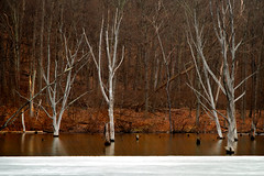 Across the Cold Lake (SunnyDazzled) Tags: park trees winter lake storm cold reflection tree ice nature water beauty forest landscape dead frozen newjersey pond colorful long state bare branches sheet snowing trunks ironworks austere