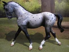 Breyer Big Ben Custom (Dawn Imagination Stables) Tags: horse classic big model ben cody milton custom breyer