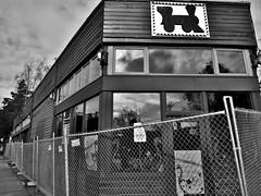 There Goes the Neighborhood (sea turtle) Tags: seattle city urban blackandwhite bw coffee fence blackwhite destruction coffeeshop neighborhood bo coffeehouse capitolhill boespresso