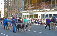Wolfhounds on Parade (moonlit2011 - I'll be back end of June) Tags: dog dogs vancouver parades parade stpatricksday wolfhound wolfhounds