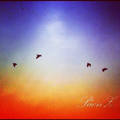 #fly #birds #colors #instafoto #fotodeldia #instacool #aves #cielo #sky #volar (Fernanda Sáenz) Tags: square squareformat hudson iphoneography instagramapp uploaded:by=instagram