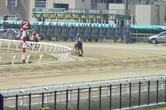 20130405-_DSC4134 (Fomal Haut) Tags: horse japan nikon nagoya 80400mm d4   14teleconverter  d800e