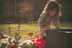 6th April - Gardening (Bond Girly) Tags: flower girl grass sunshine garden spring amy gardening digging lawn pot growing finally potting