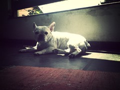 Olguinha tomando seu banho de sol do Domingo! (fredechelles) Tags: myhome uploaded:by=flickrmobile flickriosapp:filter=mammoth mammothfilter