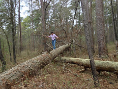 Log Challenge #3 (Editor B) Tags: mississippi photostream xy