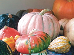 "snap-gourds • <a style=""font-size:0.8em;"" href=""http://www.flickr.com/photos/48334191@N00/8659998656/"" target=""_blank"">View on Flickr</a>"