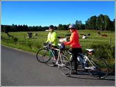 Biking around in the parish (with pros) (Brje Trttne) Tags: cow cows sweden bikes crescent biking cannondale livestock bovines vrmland sffle bicykles