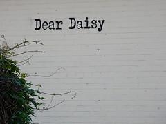 Dear Daisy (mikecogh) Tags: greeting daisy wall blank curious blackforest