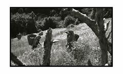 Farmer (deniscadiou) Tags: bw travel portrait people paysage landscap argentique asia voyage himalaya leica leicam montagne