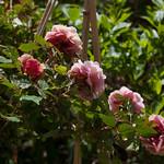 oneplant, ouryard, plant, jdy141 XX201605209874.jpg thumbnail
