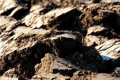 rafz_143_20022014_15'51 (eduard43) Tags: pflug landwirtschaft agriculture erde boden scholle ground plaice 2014 rafz