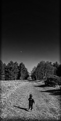 Moon Walk (miniwaites) Tags: nex sky walk a6000 blackandwhite forest mono monochrome moon nik niksuite path sony striding tree trees walking eyke england unitedkingdom gb