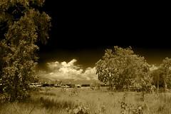 Bush at Mandorah Beach (betadecay2000) Tags: bush mandorah beach darwin northern territory australia australien busch trees tree baum bume ozeanien australischer outdoor pflanze urwald gras grass pflanen grn green natur nature himmel blau eukalyptus idylle wildnis forrest timber wood woods wald wlder waelder austral australie landschaft feld