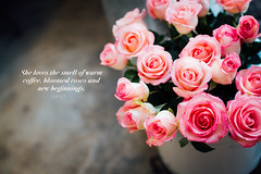 Roses (bibo_huynh) Tags: roses pink canon flowers photoraphy photooftheday thephotoraphy thephotoraphyblog dalat