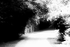 L'cole buissonnire. (Kasur) Tags: blackandwhite arbres fort lumire