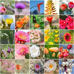 100x Second 25 (xTexAnne -SoDamnBusy!) Tags: diannewhite nikond7100 100x2016 flowersplants collage