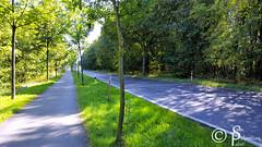Streets (sebastianpabst) Tags: street strase asphalt bume allee samsung galaxy