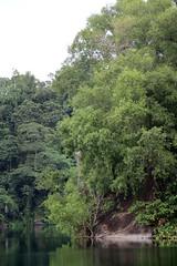 IMG_0464 (trevor.patt) Tags: palauubin singapore quarry heron