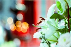 () Tags:  leica  elmaron 10028 100mmf28 100mm f28 m42  kodak gold 100 kodakgold100 pentax spf  film  filmphotography