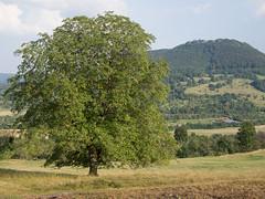 Tree / Baum (schauplatz) Tags: bissingenteck deutschland schwbischealb wanderung baum landschaft landscape sommer sptsommer summer
