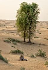 Desert tree (Tiigra) Tags: dubai unitedarabemirates ae 2013 landscape nature plant tree wood