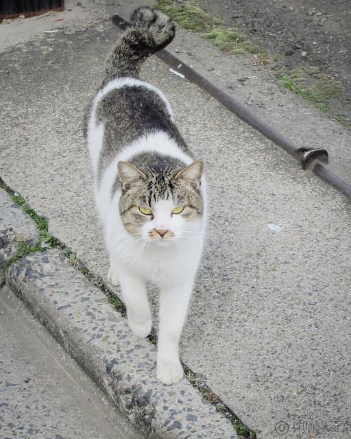 Today's Cat@2013-02-09