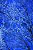 Surreal Branches (K M V) Tags: blue trees winter snow branches fractals whitebalance shallowdof tungstenlight treesinwinter snowcoveredbranches brancheswithsnow somethingblueinmylife