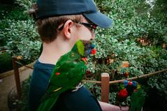 ( Nino) Tags: usa film st gardens virginia us kiss kissing 10 united valentine valentines states mm 14th parrots busch
