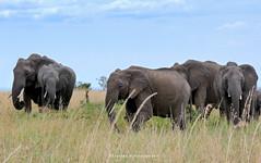 P1090056 (Tamara Photography) Tags: africa nature animal landscape kenya wildlife masaimara