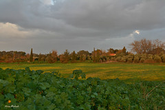 Late Afternoon (Nira Dabush) Tags: trees winter house field yellow landscape photography israel artist photographer village view fineart greens     textiledesigner   berkovitz    niradabush