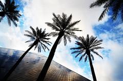 5 palms (Harry2010) Tags: windows cloud tree window lasvegas bluesky palm thestrip luxor