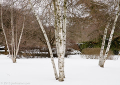 White on White (Jim Frazier) Tags: park trees winter plants white snow cold nature beautiful beauty lines gardens museum landscape botanical three illinois flora scenery quiet peace natural cloudy snowy branches scenic freezing peaceful tranquility overcast dupage calm symmetry il zen serenity frame pensive symmetrical botanic chilly serene birch trunks framing february botanicgarden frigid contemplative horticulture preserve botanicalgarden depth tranquil centered wheaton publicgarden nippy cantigny mirroring headon zenlike verticallines dupagecounty q4 echoing cantignypark centralperspective 2013 ldfebruary jimfraziercom wmembed ld2013 20130223dupage upperburoakgarden