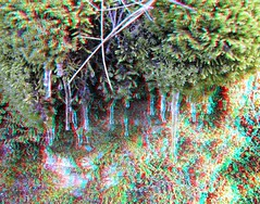 IMG_5579-DM-IciclesOnMoss2-SX1 (EdwardMitchell) Tags: red canon lumix stereoscopic 3d spokane cyan anaglyph powershot sx1 gh2