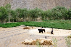 Agricultural Production - Afghanistan (UNEP Disasters & Conflicts) Tags: afghanistan peace conflict climatechange unepmission ainsikullberg development change agriculture livestock drought unep unenvironment